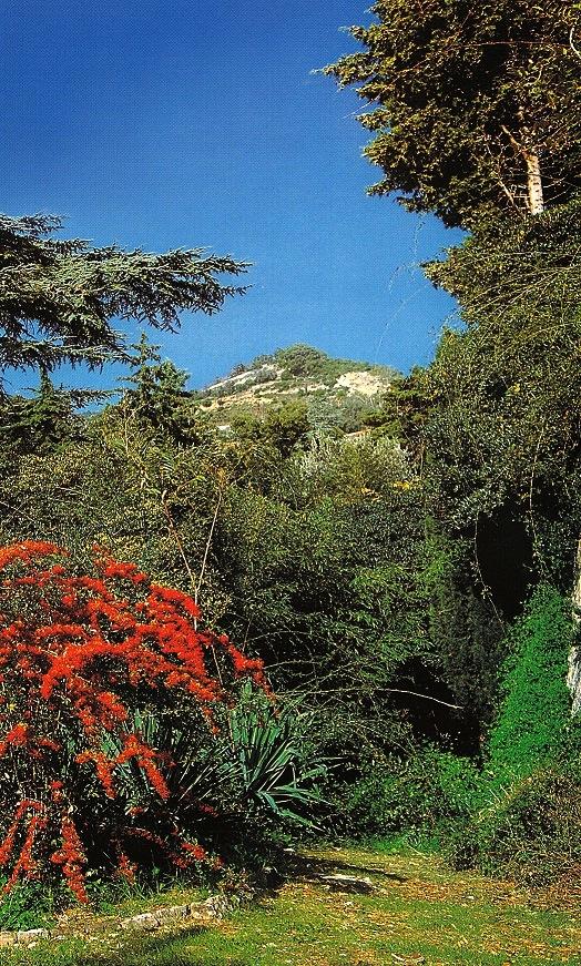 Autunno ai Giardini Hanbury con Cotoneaster  (ph. ∏Simone Sciutto))