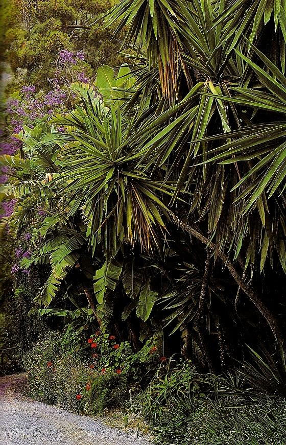 Estate ai Giardini Hanbury con Jacaranda mimosifolia (ph. ∏Simone Sciutto))