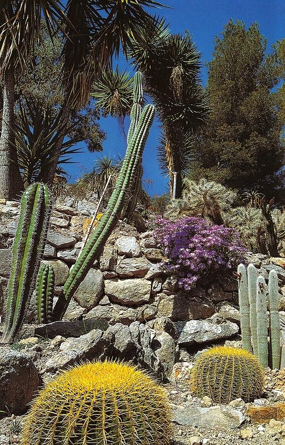 Primavera ai Giardini Hambury Echinocactus grusonii, Cleistocactus rojoi, Cereus peruvianus, Lampranthus roseus (ph. ∏Simone Sciutto)